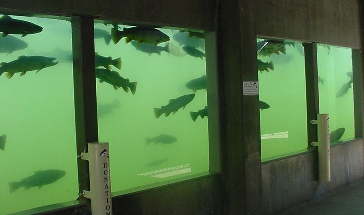 1000 images about my travels on pinterest red river for Spearfish fish hatchery