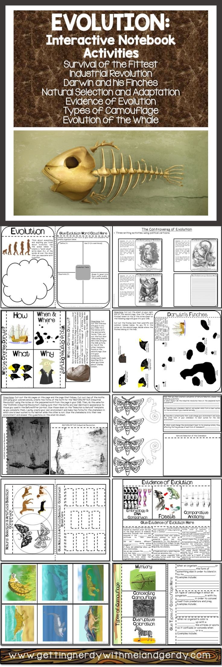 Evolution interactive notebook activities - natural selection, peppered moth, whale evolution, evidence for evolution, types of camouflage, Darwin's studies, his travels, Galapagos finches and more!