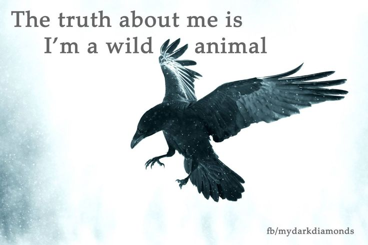 The truth about me is I'm a wild animal ... Mehr auf www.bittersweet.de #mydarkdiamonds #fantasy #romance