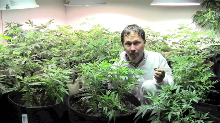 """How to Grow Organic #Cannabis Indoors. John from http://www.growingyourgreens.com shares with you how you can grow your own organic cannabis indoors. In this episode, John gets his medical cannabis card to use and grow medicinal cannabis aka marijuana per prop 215 in the state of California.  In this episode you will learn where john will choose to get his """"medicine"""" and then you will go in a behind-the-scenes tour of a North Coast Naturals, a medicinal cannabis collective (farm)..."""