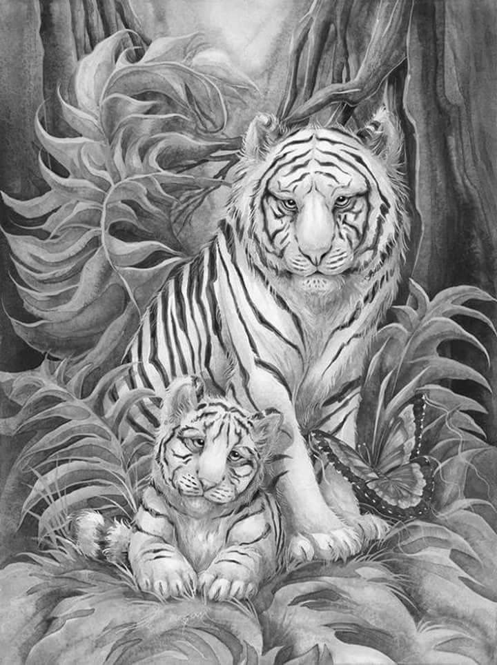 458 best kleurplaten voor volwassenen images on Pinterest Adult - copy coloring pages of tiger face