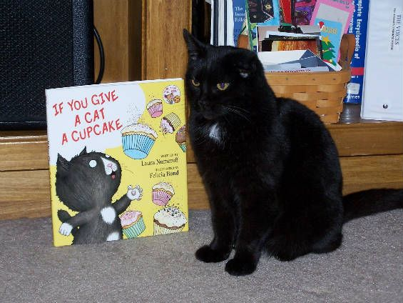 17 Best images about Library animals on