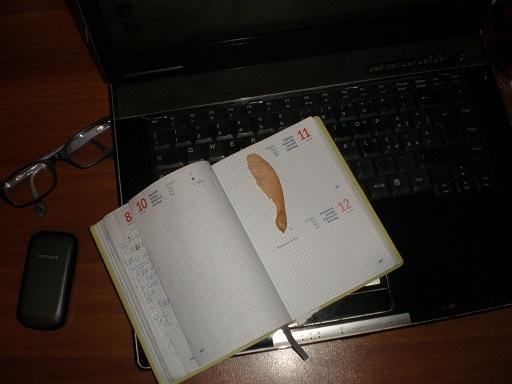 Realizzo, allora, di avere tra le mani qualcosa di fantastico: un seme alato!    ...Mi affretto a custodirlo. Tra le pagine della mia agenda. Come i fiori tra i diari di bambina.