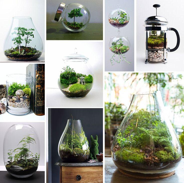 50 Creative Ideas To Display Your Air Plants In A Most: Gør Det Selv Projekter, Gør Det Selv