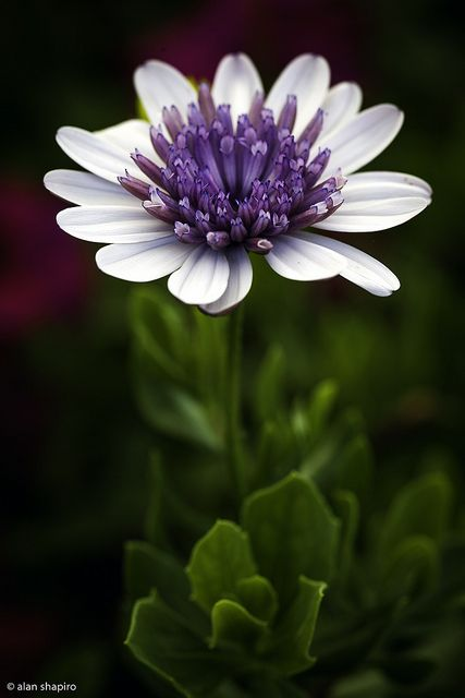 Flowers Y❤B <> Purple & White Flower