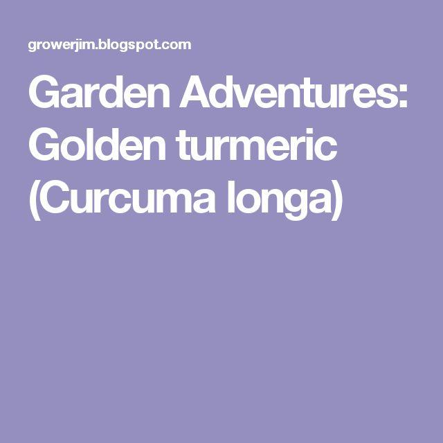 Garden Adventures: Golden turmeric (Curcuma longa)