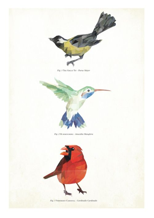 Bird Poster - Anders Wallner