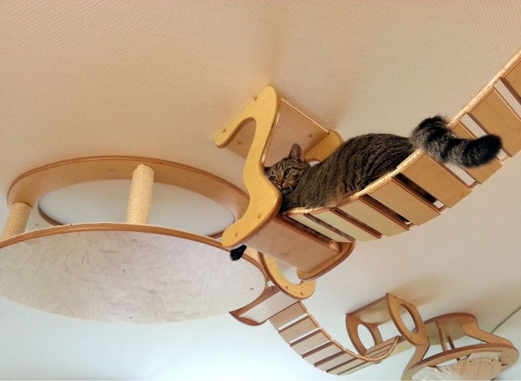 King of the (indoor) jungle! Jungle gym for felines. German designers Goldtatze make custom-built playgrounds for spoilt cats. The playful pets can climb bridges suspended from the ceiling, rest in kitty hammocks and sharpen their claws on real tree branches.