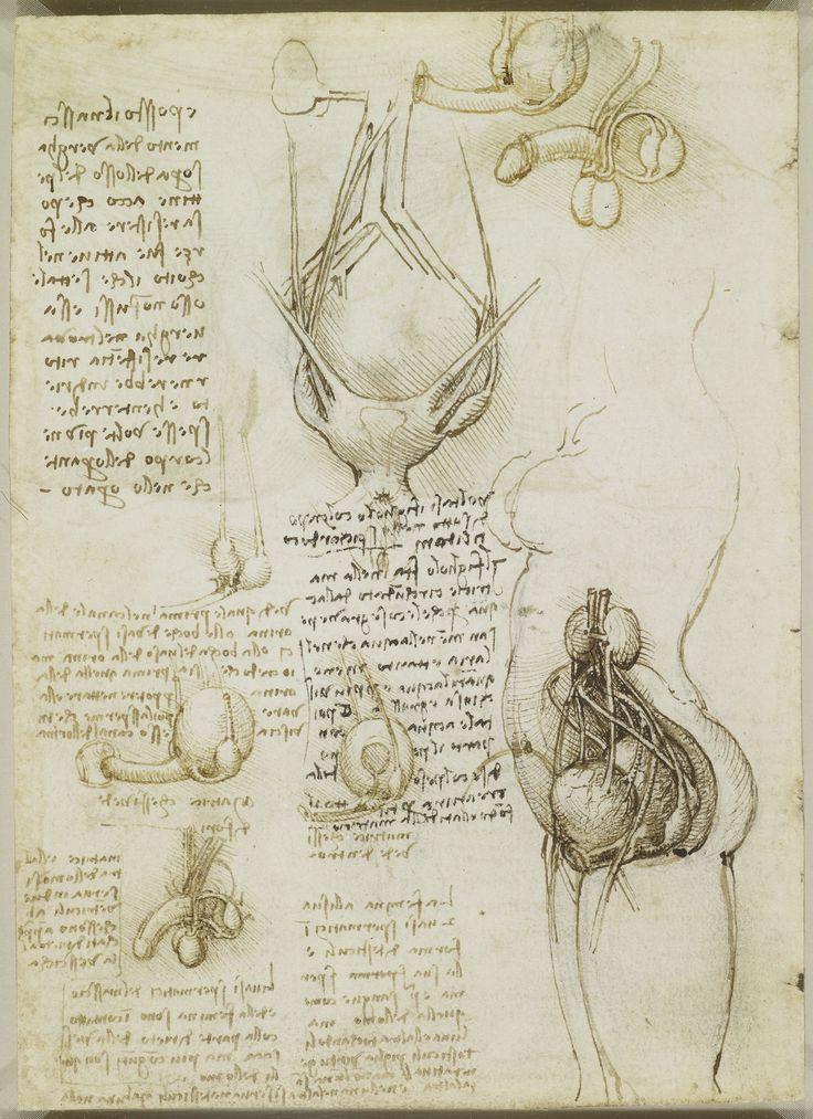 The male and female reproductive systems Leonardo da Vinci (Vinci 1452-Amboise 1519) #TuscanyAgriturismoGiratola