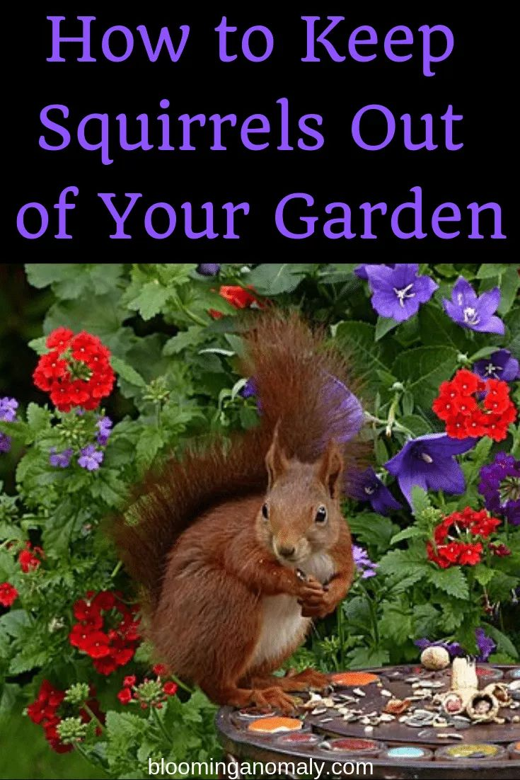 How to keep squirrels out of your garden blooming
