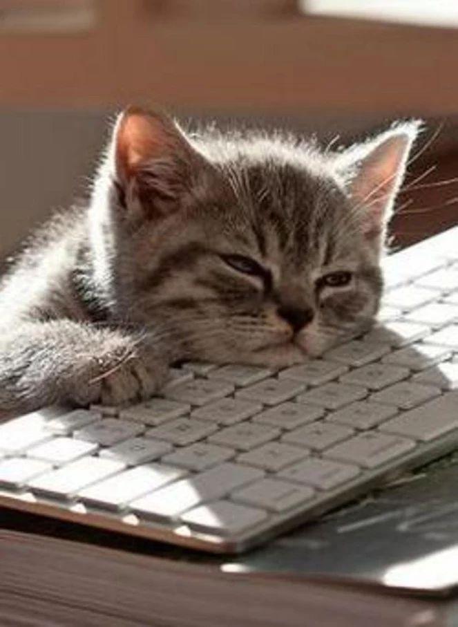Взрослые люди? Сидим в интернете,  Лайкаем фото, общаясь как дети,  С теми, кто нас совершенно не знает,  Странно – при этом душа отдыхает…  Котики вновь вырываются в топы, Видим природу сквозь фильтр фотошопа. Да, мы не дети, но часто бывает - Именно это порой и спасает  От напряжения нашего мира, Где разобщения черные дыры... Здесь позитивом себя заряжаем, С новыми силами - жить продолжаем!