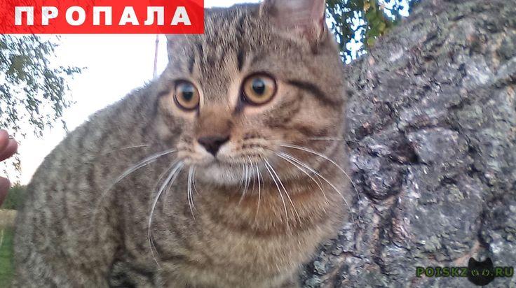 Пропал кот ищем своего г.Пионерск http://poiskzoo.ru/board/read31546.html  POISKZOO.RU/31546 В районе пос. Заостровье в начале сентября потерялся кот в чёрном ошейнике. Серо-полосатый без белых пятен. Очень его ищем. Помогите найти! Вознаграждение. ... Елена.   РЕПОСТ! @POISKZOO2 #POISKZOO.RU #Пропала #кошка #Пропала_кошка #ПропалаКошка #Пионерск