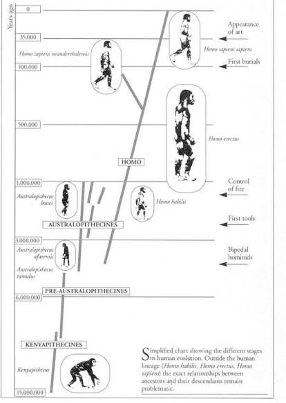 Hominid Evolution