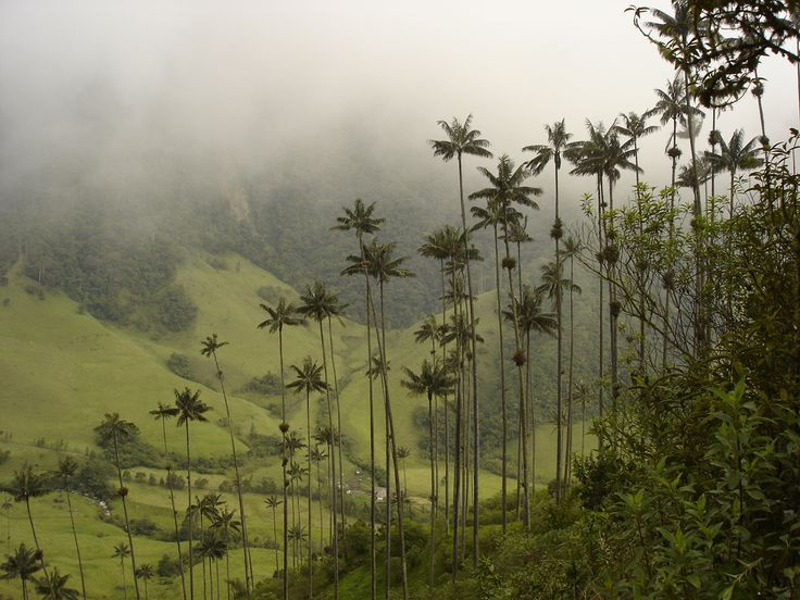 Cocora Valley, Quindio, Colombia #travel #places #beautiful #cute #cool #trip #holidays #vacation #sea #see #pictureoftheday #backpackers #amazing #viajar #viajes #viatges #lugares #nqf #colombia
