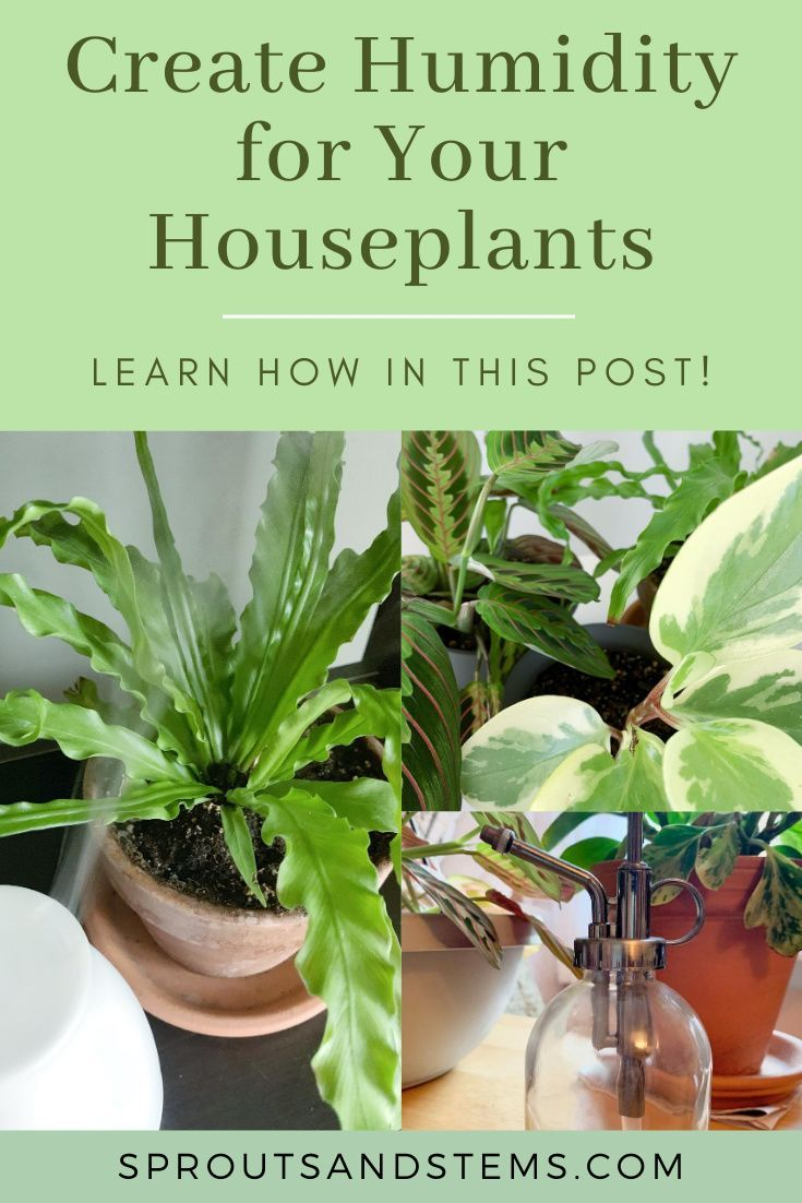 Creating Humidity For Your Houseplants In 2020 House Plant Care Houseplants Plant Care
