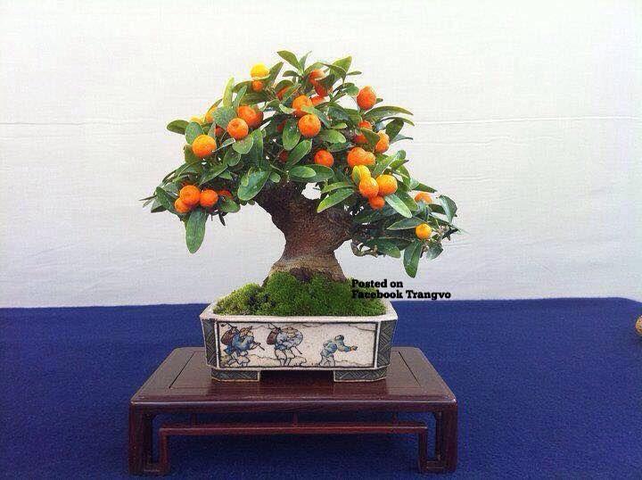 les 25 meilleures images du tableau bonsai tree tattoos. Black Bedroom Furniture Sets. Home Design Ideas