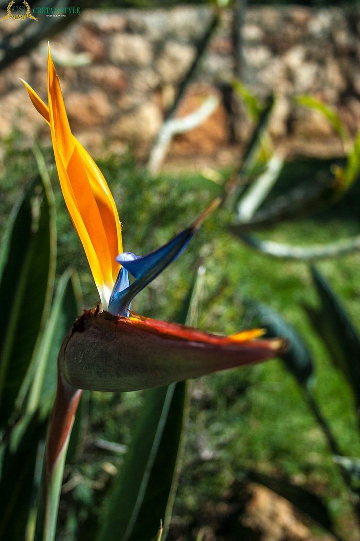 Parrot flower...