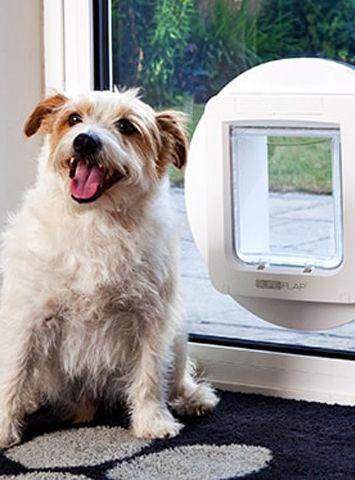 Microchip Dog Door Microchip Pet Doors Pinterest Pet Door