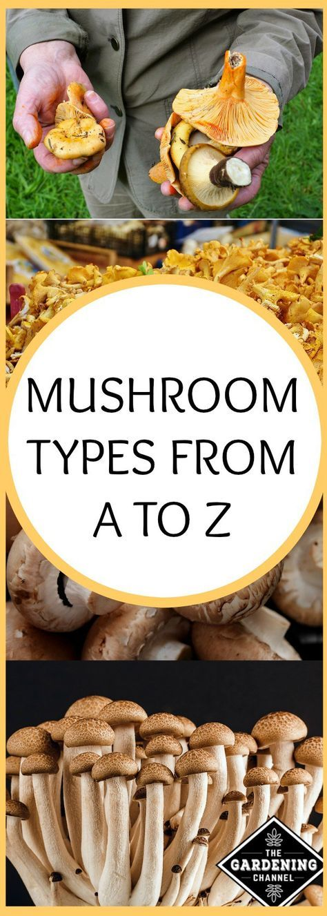 Mushroom Types from A to Z. Edible mushrooms are full of antioxidants. Identify the mushrooms in your garden.
