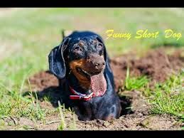 Remember that bored dogs will bark, dig holes, look for ways to get out of the yard, chew outdoor furniture, dig under fencing, climb or jump over fen