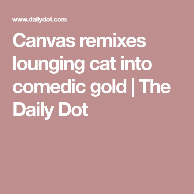 Canvas remixes lounging cat into comedic gold | The Daily Dot