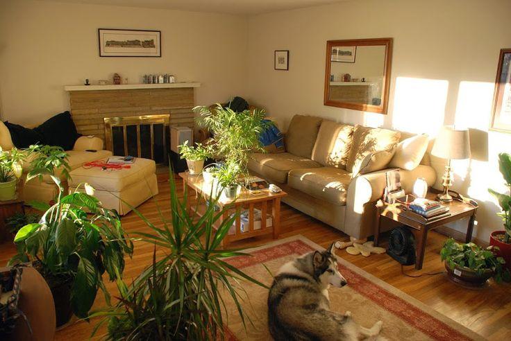 Cây cối xanh mát trong phòng khách