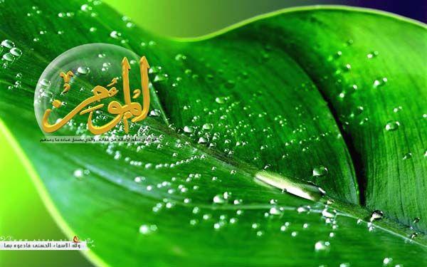 عالم الحيوان خلفيات اسماء الله الحسنى اكثر من روعة Plant Leaves Allah