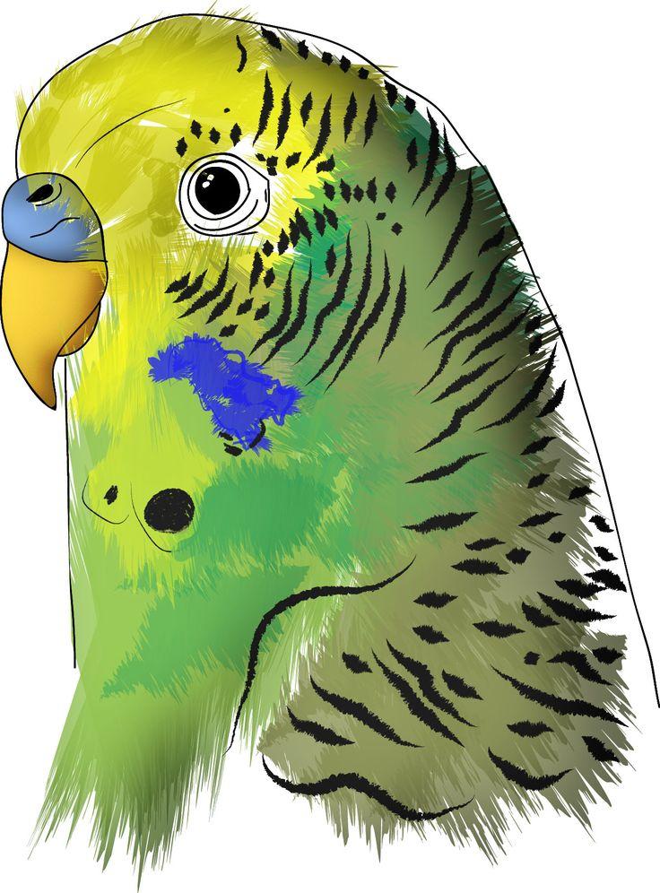 Parrot sketch  www.cs4rt.com  #parrot #parrots #cocorita #budgie #budgies #pappagallo #pappagalli #sketch #draw #dawing #disegno #grafica #graficadigitale #graphic #art