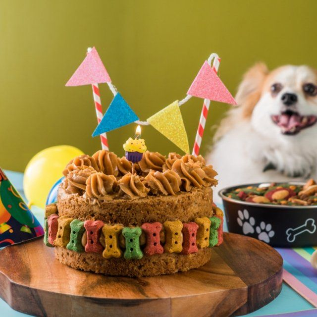Frozen Dog Treats, Diy Dog Treats, Homemade Dog Treats, Puppy Birthday Parties, Dog Birthday, Dog Bakery, Dog Snacks, Dog Food Recipes, Akira