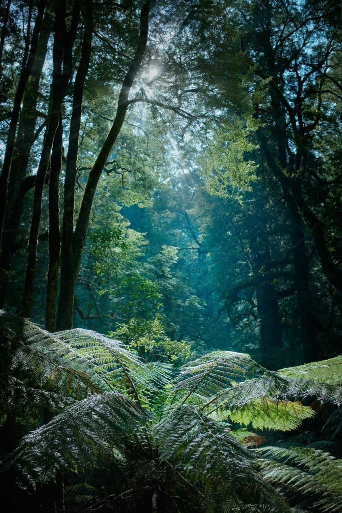 Great Otway National Park  #nature #travel #rainforest #photography