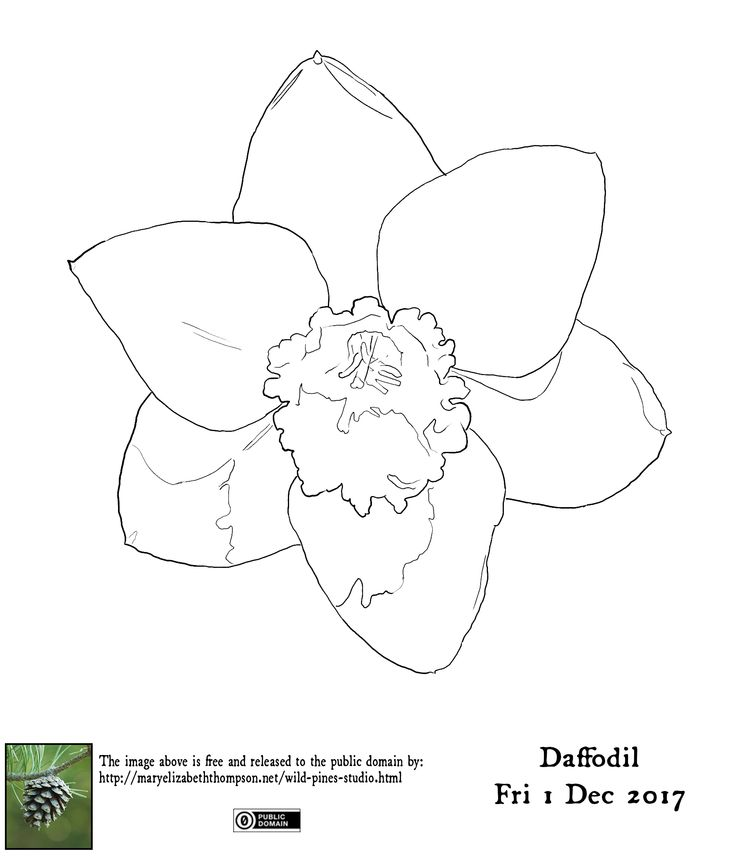 Traceable for Daffodil