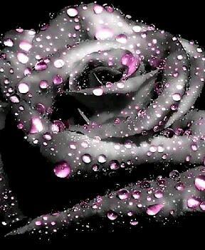 *☆ Black Rose ☆*                                                                                                                                                                                 Más