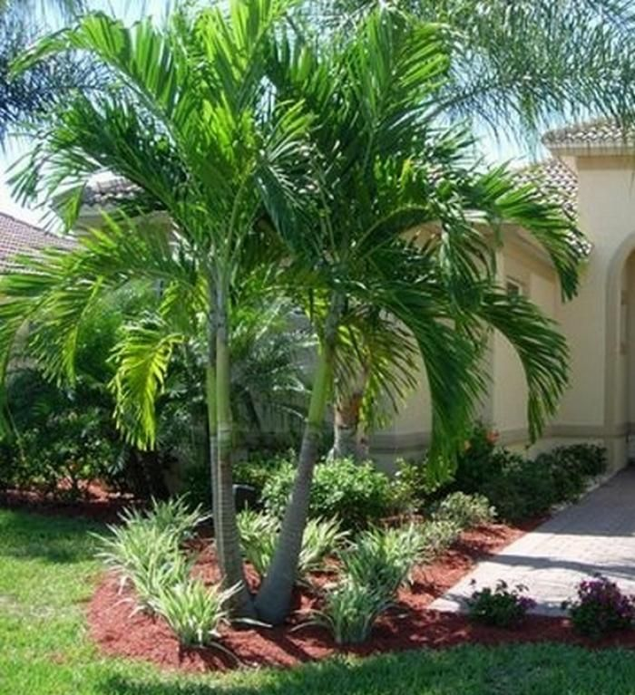 45 Awesome Florida Landscaping With Palm Trees Ideas Tropical Landscape Front Yard Florida Landscaping Palm Trees Landscaping