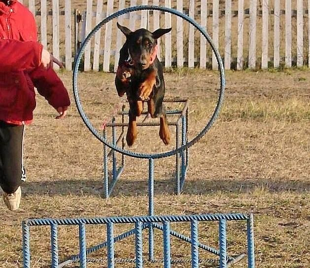 Rugby Dog Agility Show: 1000+ Images About Dog Agility On Pinterest