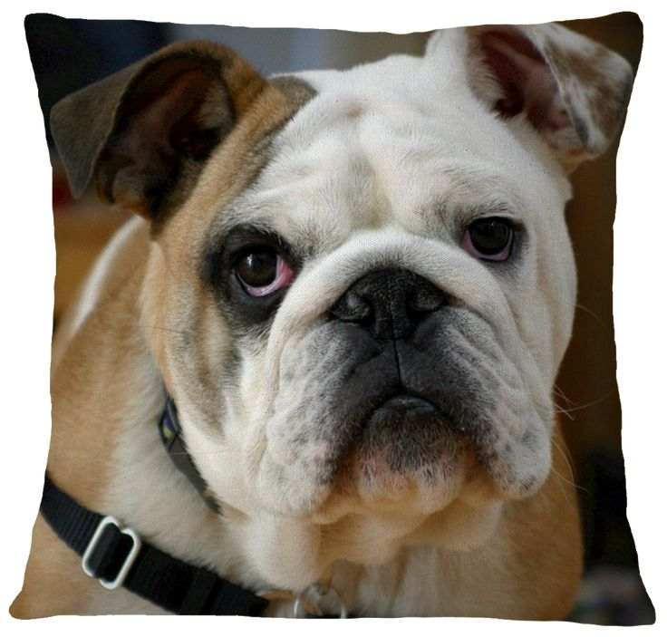 Bulldog pillow cover bulldog puppies best dog breeds