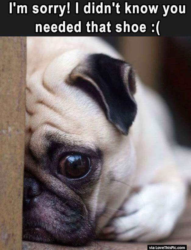 I Didn't Know You Needed That Shoe cute animals dogs adorable dog puppy animal pets humor funny animals funny pets funny dogs #doghumor