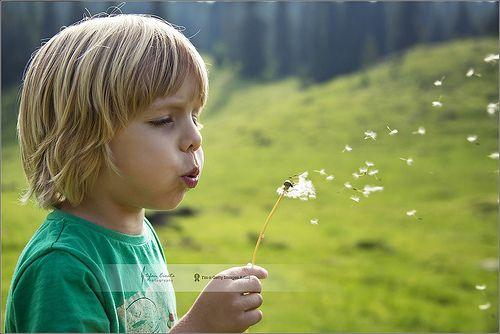 Play in the wind | Transylvania