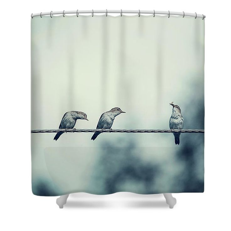 Nature Shower Curtain featuring the photograph Birds On Wire by Oksana Ariskina Two birds on wire watch to another bird has a food, Grunge retro style Available as poster, greeting card, phone case, throw pillow, framed fine art print, metal, acrylic or canvas print with my fine art photography online: www.oksana-ariskina.pixels.com #OksanaAriskina