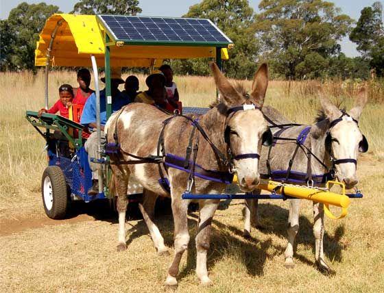 solar donkey cart