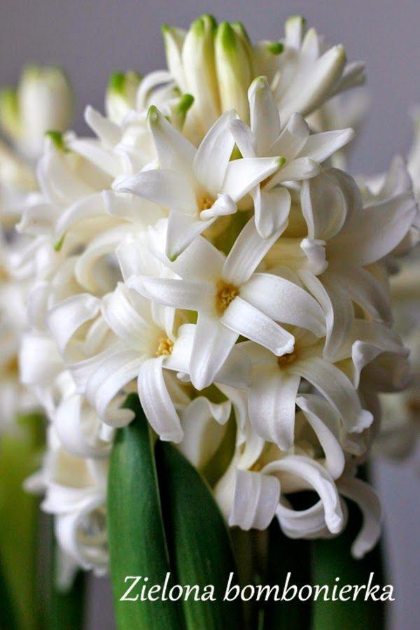 Zielona bombonierka: Biały ogród