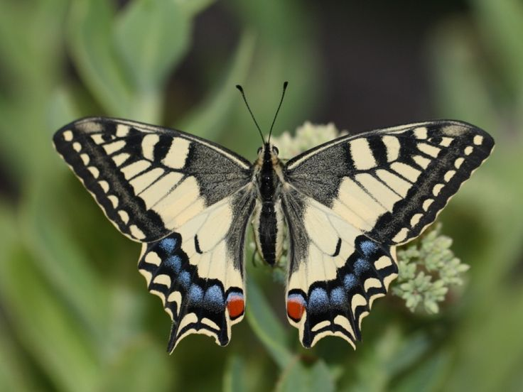 21 mooie kleurrijke vlinder - photo #1