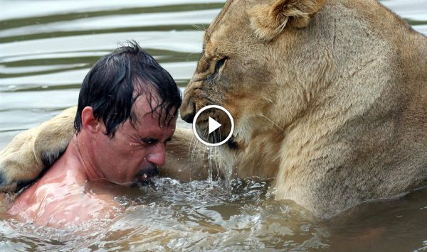Man Tries to Hug a Wild Lion, What Happened Next Was Shocking | BoredomBash Bringing attention to the beauty of the species of Lions and Hyenas, and the danger of them becoming extinct.