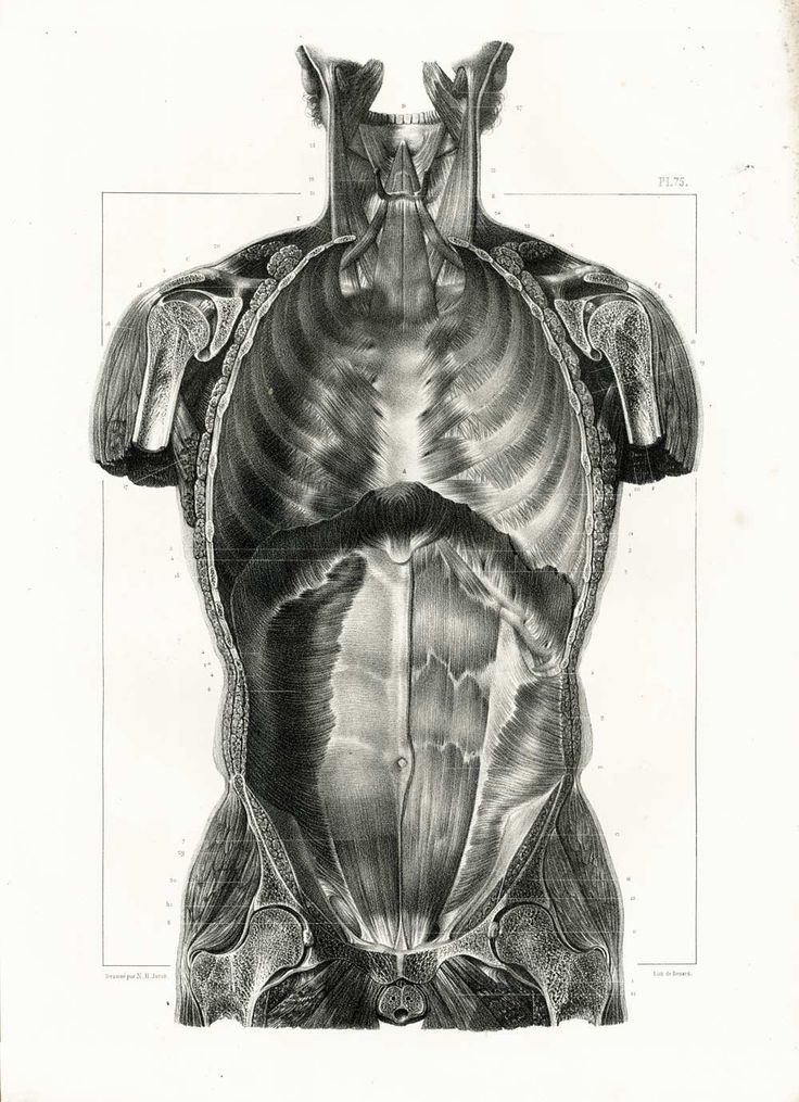 1831 Vintage Thorax Print, Human Trunk Anatomy illustration Poster Bourgery Drugs Wall Artwork e54992f53ea66d647fbb4dfc552ef7d9