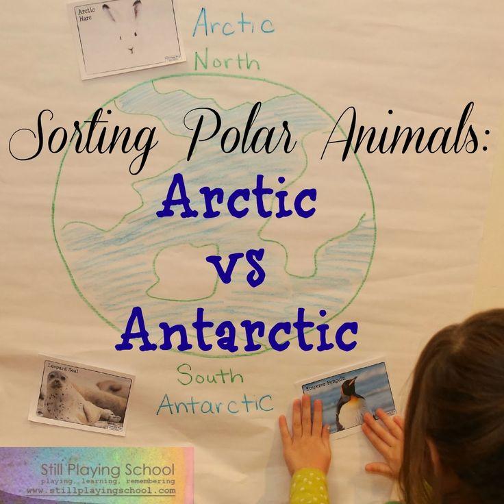 Polar Animal Sort: Arctic vs Antarctic from Still Playing School