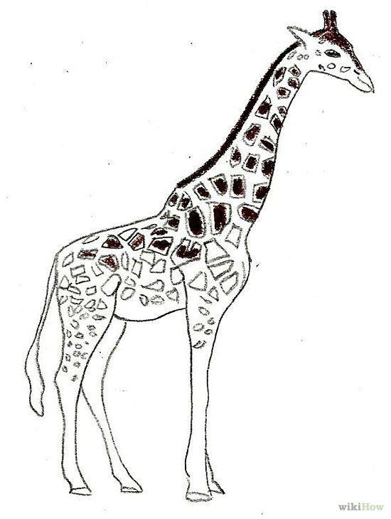 draw a giraffe a giraffedrawing stepmammalshow