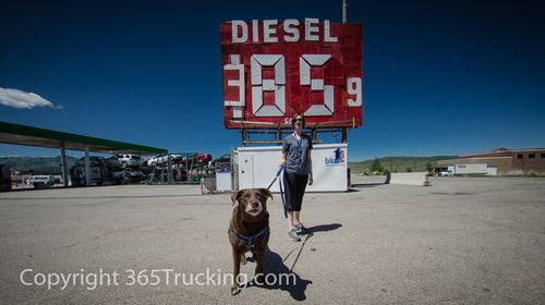 Volunteer Truckers Pet Transport Chocolate Lab Cowan OH to UT