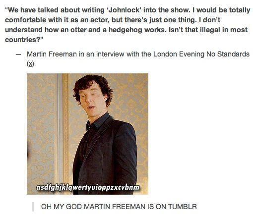 """MARTIN FREEMAN OH MY GOD!!!!!! i LOVE that he knows about the otter and the hedgehog!!!!!!!!!!!!!!!!!!! ....how does he feel knowing millions of people think he's a hedgehog...? Well according to Amanda Abbington, he laughs, he cries, and he curls up into a spiky ball for winter."" <---This just made my day and I am prone to believe it. haha. ;} <--- pinning for the comments brb dying loooool"