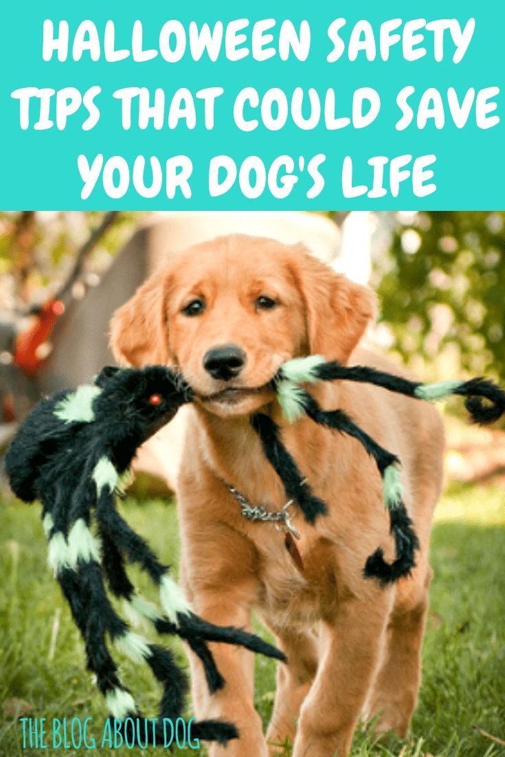 Safety Tips That Could Save Your Dog S Life The Blog About Dog