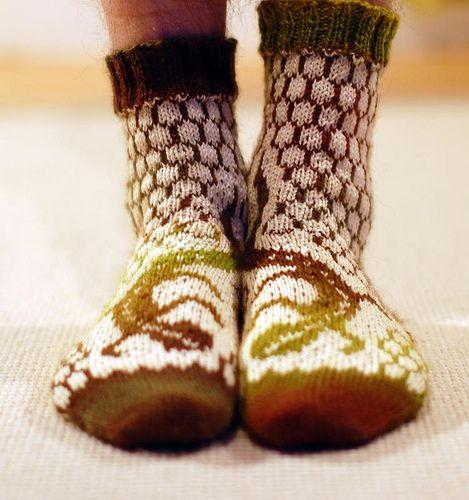 Socks Lizard by osloan on flickr!!