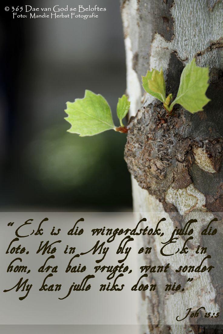Bybelvers Joh 15:5 Ek is die wingerdstok, julle die lote. Wie in My bly en Ek in hom, dra baie vrugte, want sonder My kan julle niks doen nie.